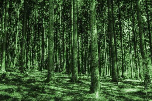 trees-identify